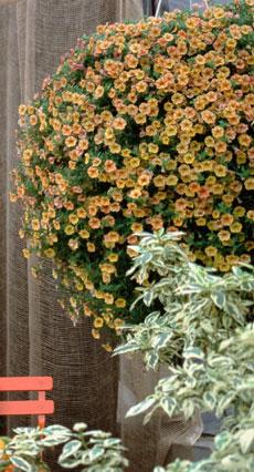 milijon cvijetova 3.jpg