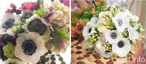 anemona-cvijet6.jpg