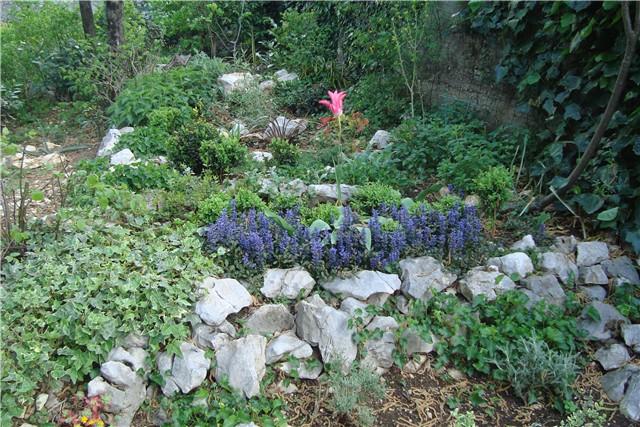 slike vrta - Vrtno cvijeće - Slika 4289