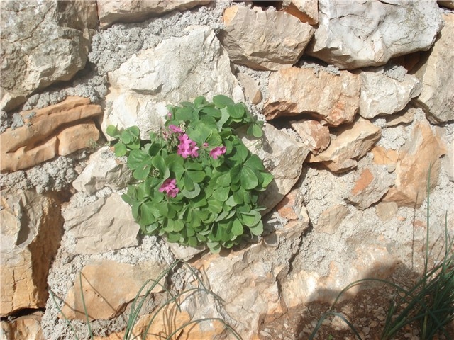 Kamen i cvet 2779b625-006