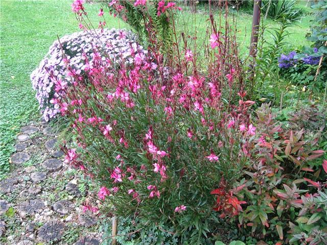 jesen u vrtu 463 - Slike od članova - Slika 76671
