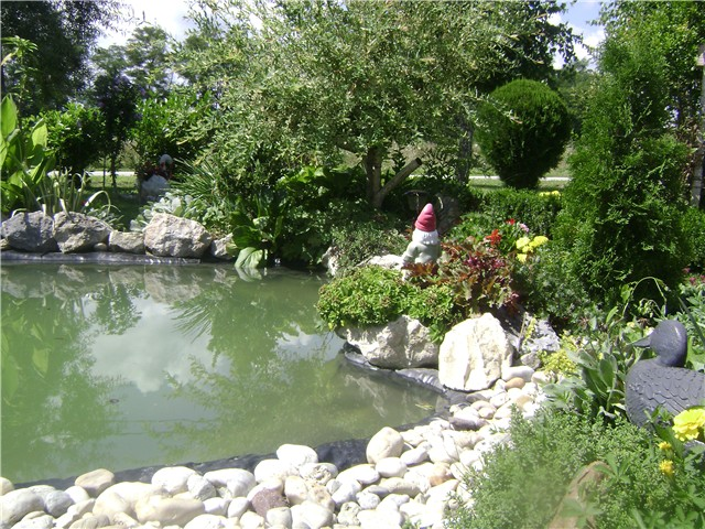 Moje jezerce - Vrtno cvijeće - Slika 14519