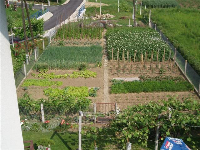 vrt u proljeće - Povrće i vrt - Slika 37412