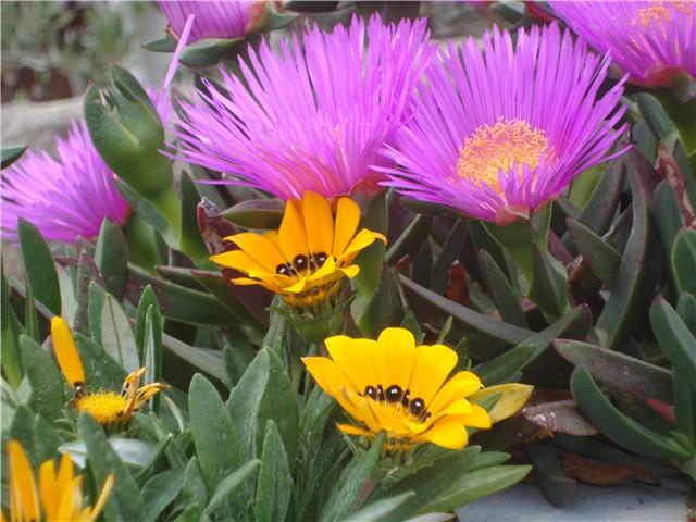 proljetno cvijeće - Vrtno cvijeće - Slika 14872