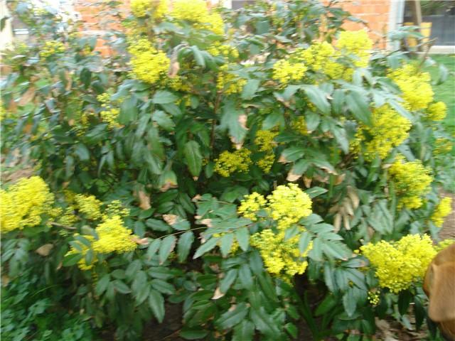 proljetno cvijeće - Slike od članova - Slika 39234