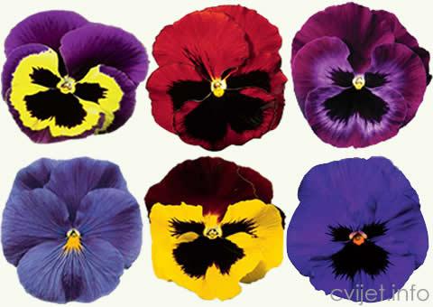 PRODAJA  cvijeća macuhica1.jpg
