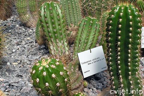 kaktus---.jpg