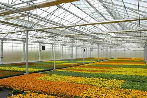 prodaja cvijeca2.jpg