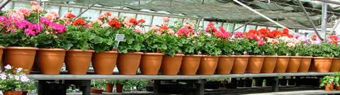 prodaja cvijeca4.jpg