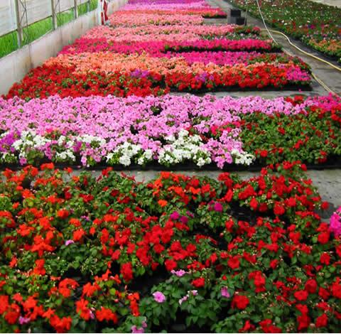 prodaja cvijeca5.jpg
