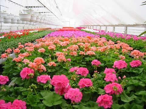 prodaja cvijeca6.jpg