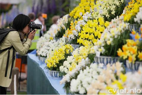 split sajam cvijeca.jpg