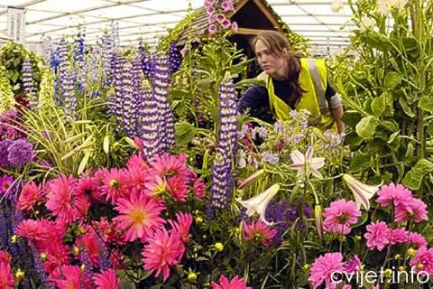split sajam cvijeca1.jpg
