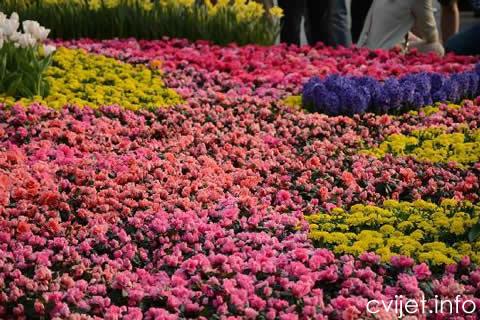 split sajam cvijeca3.jpg
